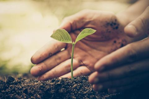 Photo of hands cupping a small seedling in dirt.
