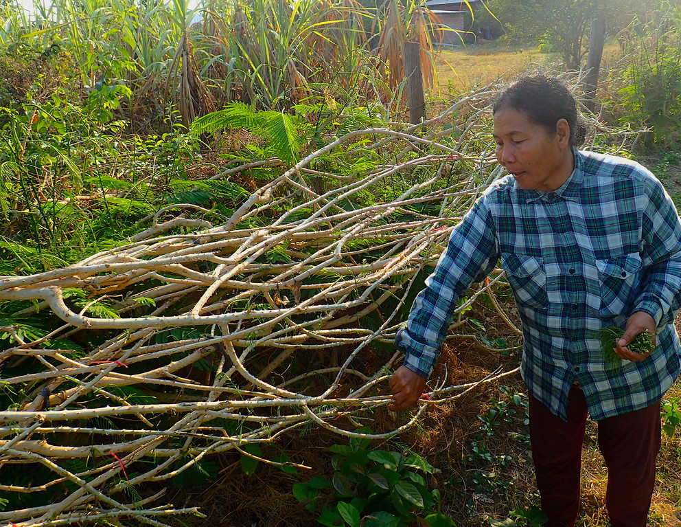 Cambodian farmer next to a living fence.